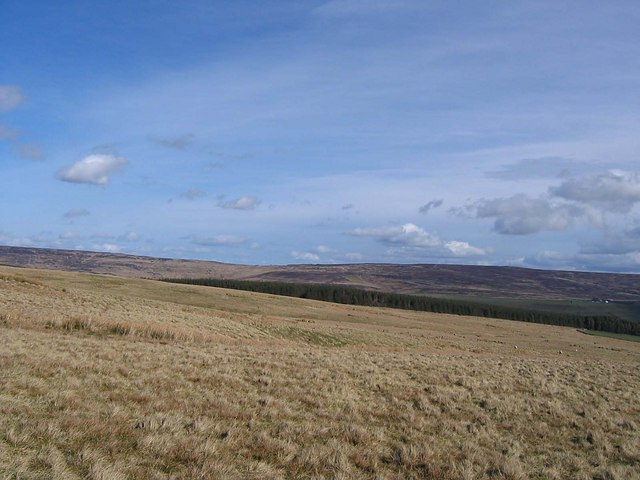 Reahope Moor looking towards Park Plantation