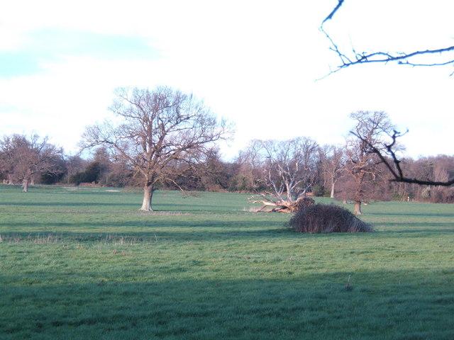 Parkland at Home Farm