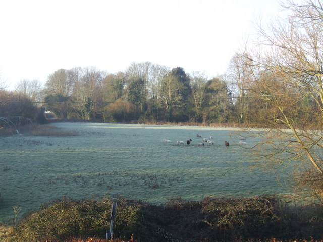 Early morning frosty field