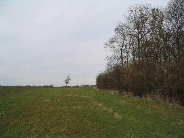 Edge of Old Head Wood