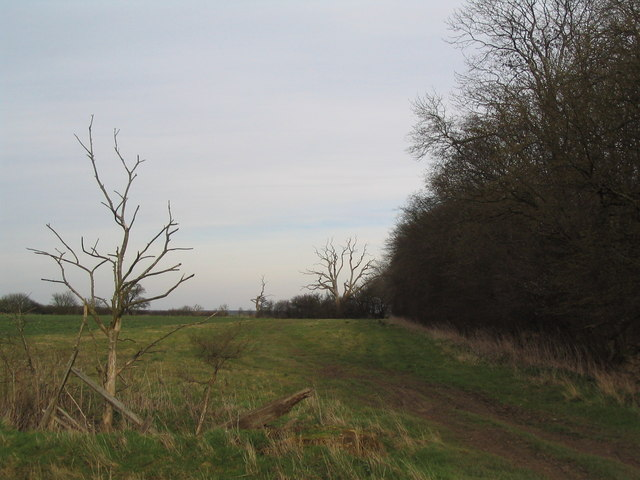 View east along northern edge of Old Head Wood