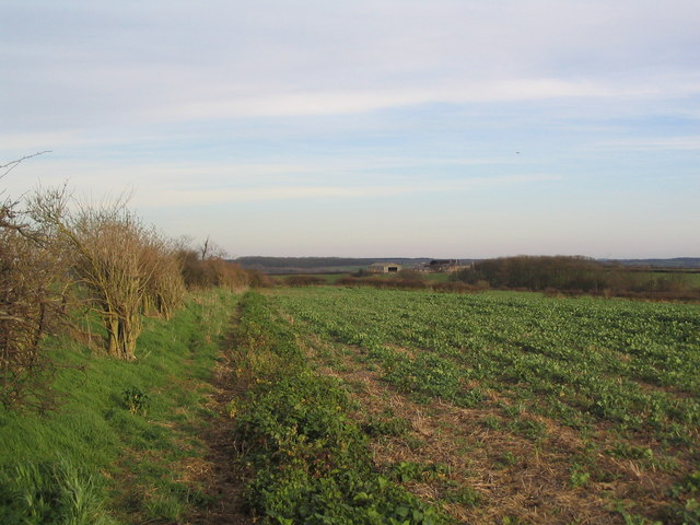 Hedgerow on footpath to Brigstock