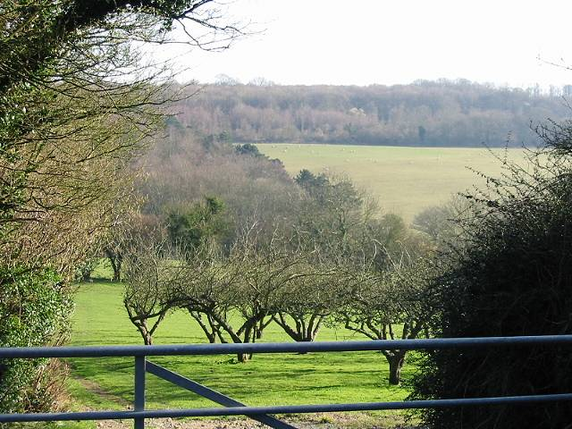Orchard and farmland from Marley Lane