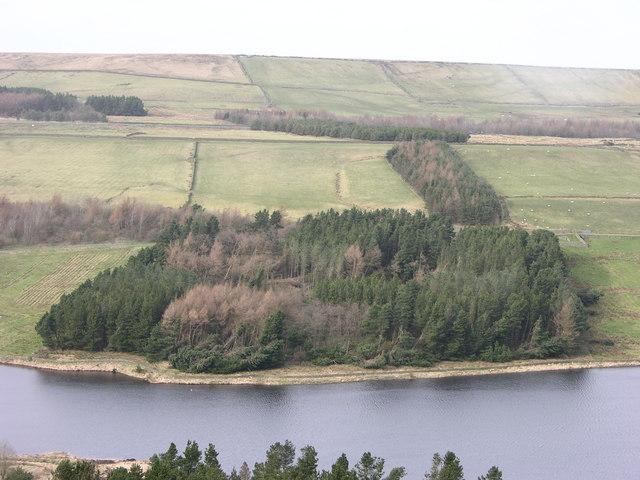 Wood beside Calf Hey reservoir