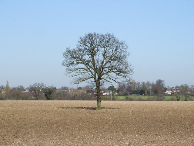 Solitary Tree in Ploughed Field