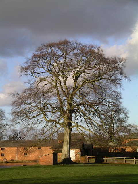 Tree adjacent to the farm buildings