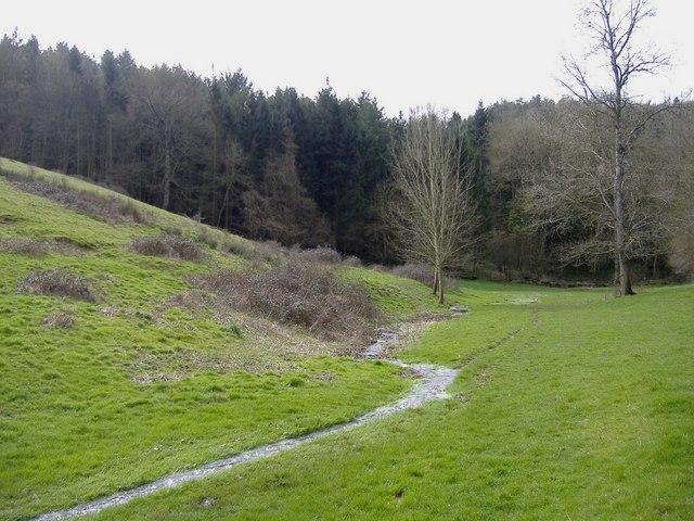 Collett's Bottom Woods