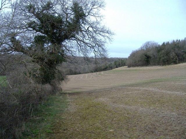 Erkwell Wood, from Weavern Lane