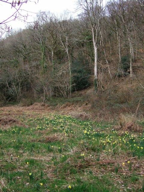 Dunsford Wood