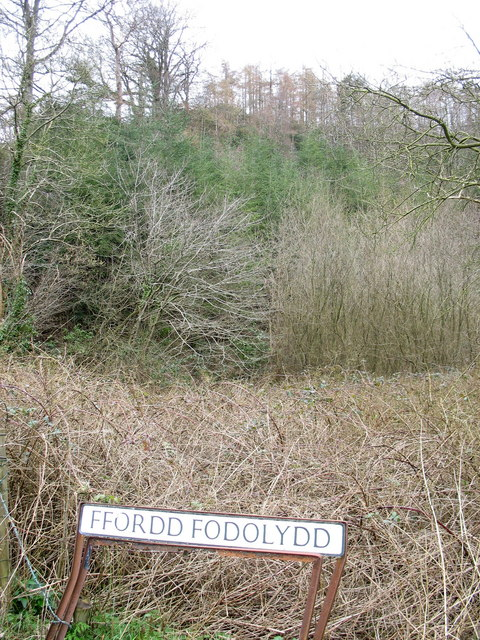 Wooded hill slope above the entrance to Ffordd Fodolydd