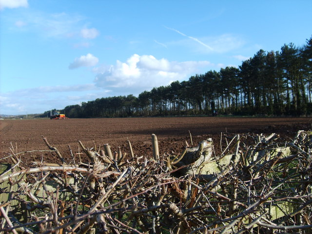 Ploughing Field