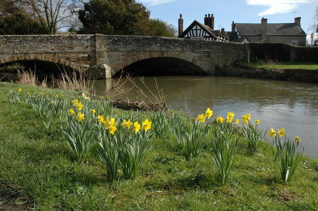 Daffodils in Eardisland