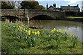 SO4158 : Daffodils in Eardisland by Philip Halling