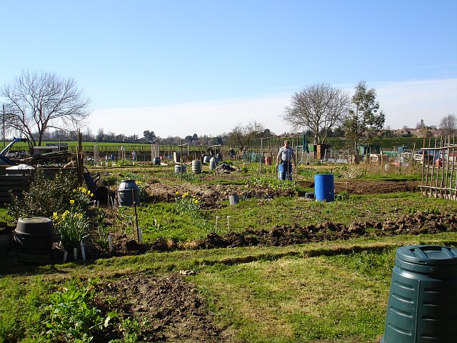 Allotments on Riddles Road