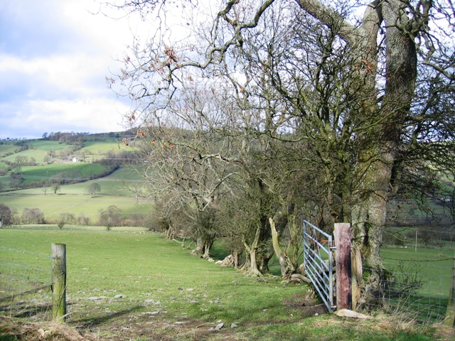 Hedge Line in the Afon Morwynion Valley