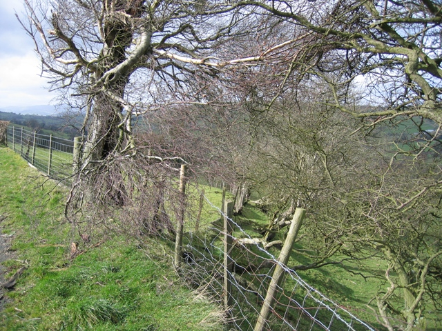 Old Hedge Line near Ty-isaf