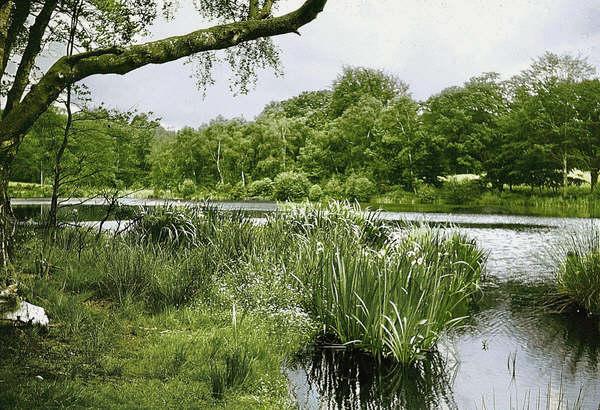 Hawkins Pond, Horsham