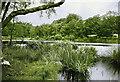 TQ2129 : Hawkins Pond, Horsham by Anthony Harrison