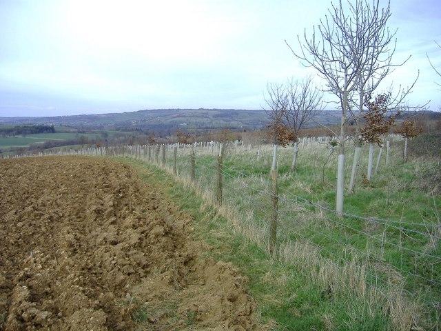 New tree plantation