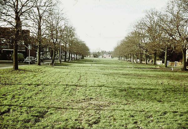 The long green, Cranleigh