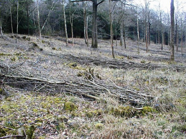 High Park Wood