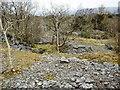SD4588 : Limestone Woodland by Mick Garratt