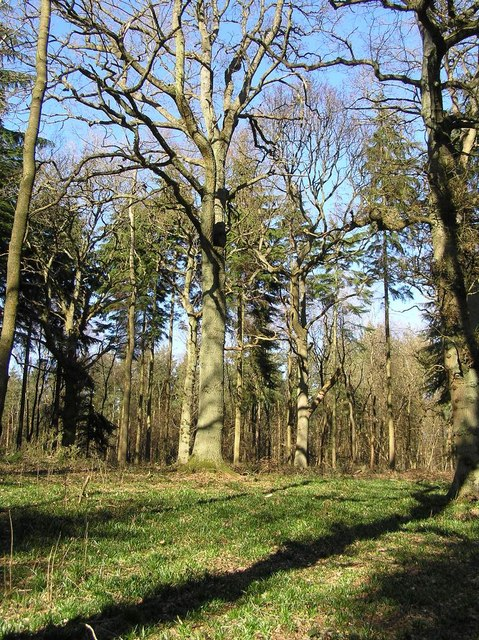 Ancient Woodland in the 'Great Copse'