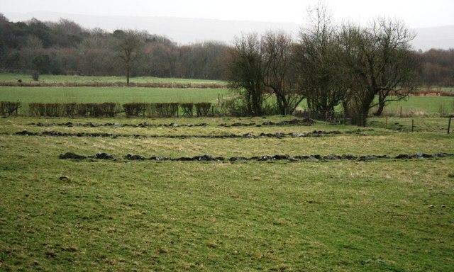 Hale Moss