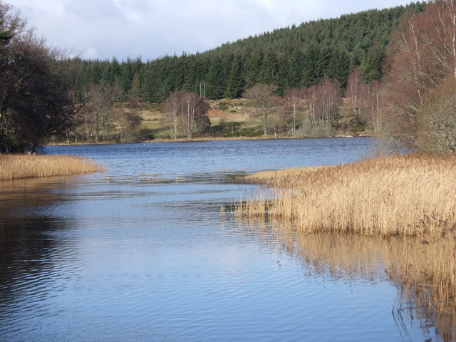 Reed beds on Loch of Aboyne