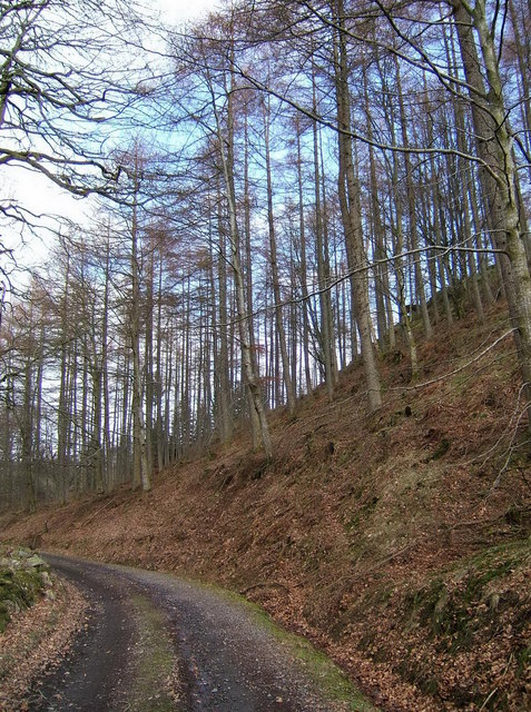 Fordie Hill wood