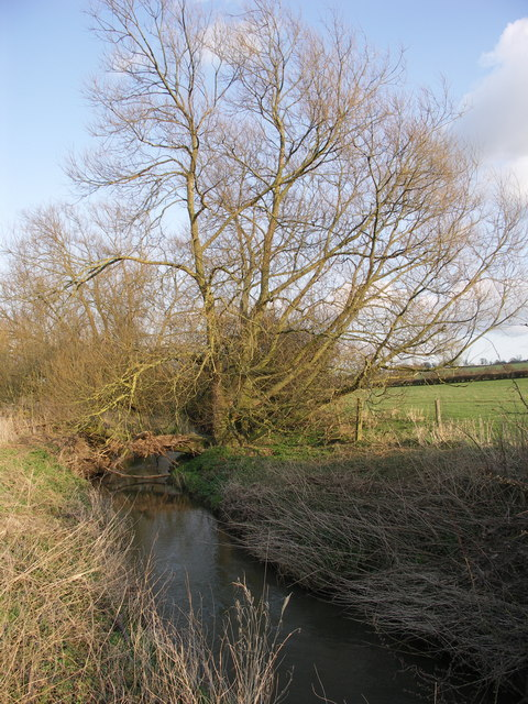Willow beside River Ise.