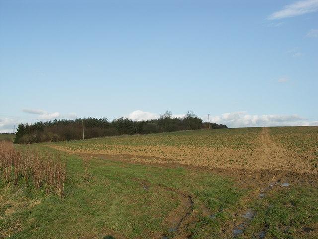 Bridleway across Bean Field.