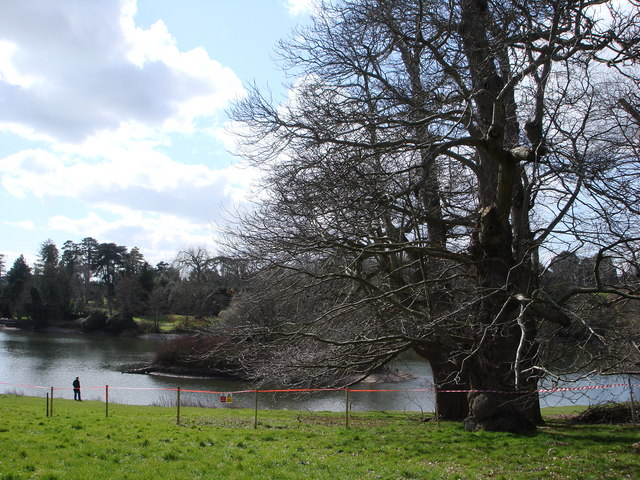Lake and island, Bicton College