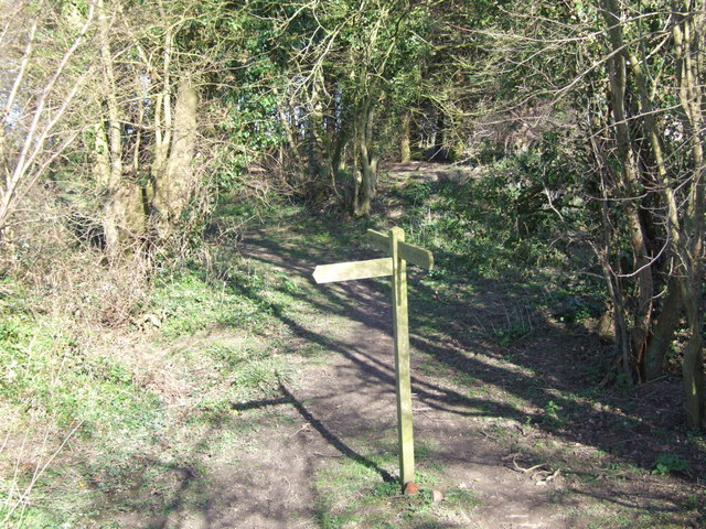 Signpost in a Glade
