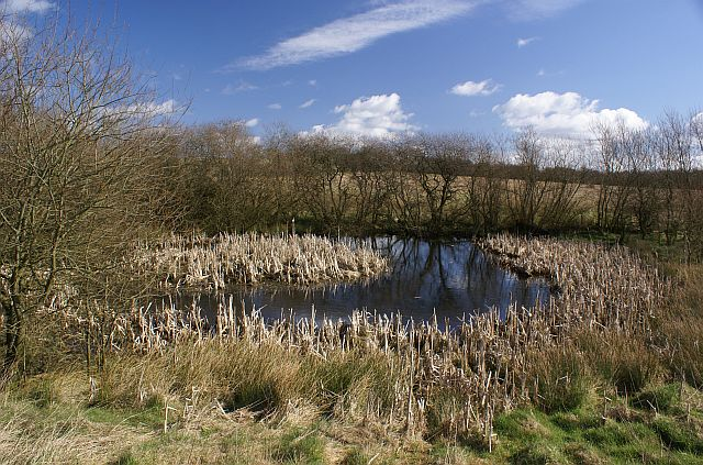 Pond off Green Lane