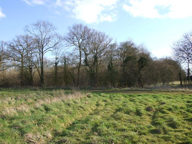 D'Oyly's Grove