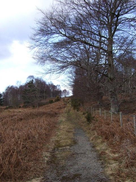 Overgrown track from A93, rounding Craig Ferrar