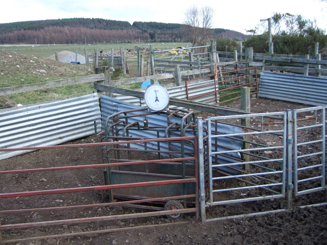 Sheep pens near Heugh-head