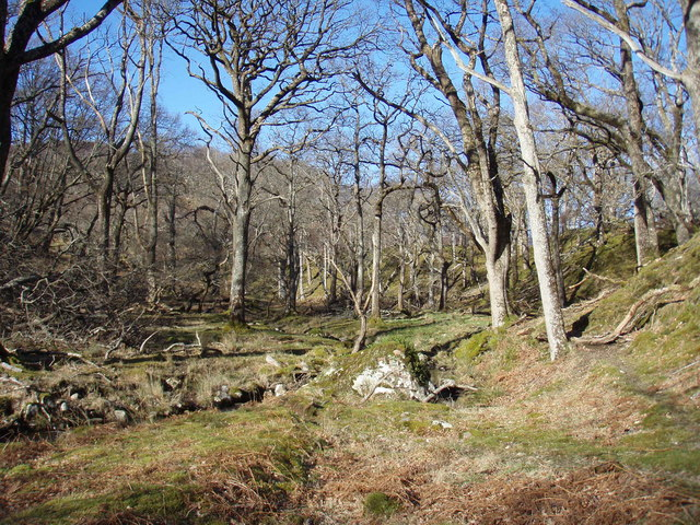 Oak Woodland at Tollie