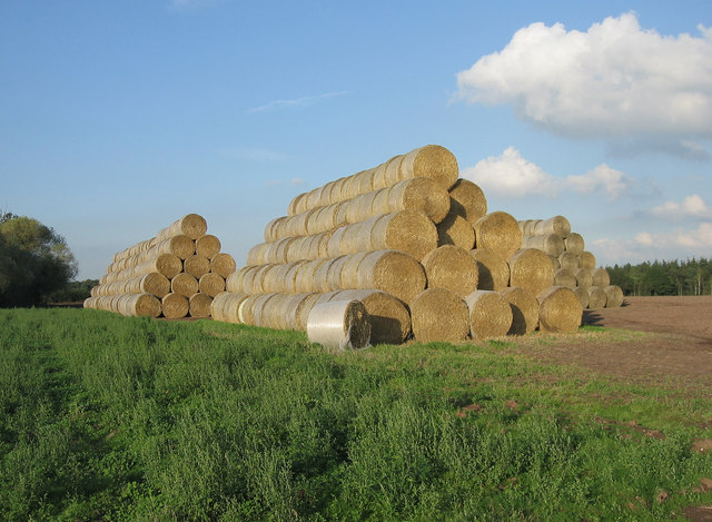 Straw Bales, Atchley Manor.