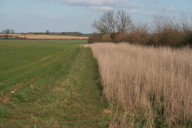 Farmland near Glaston