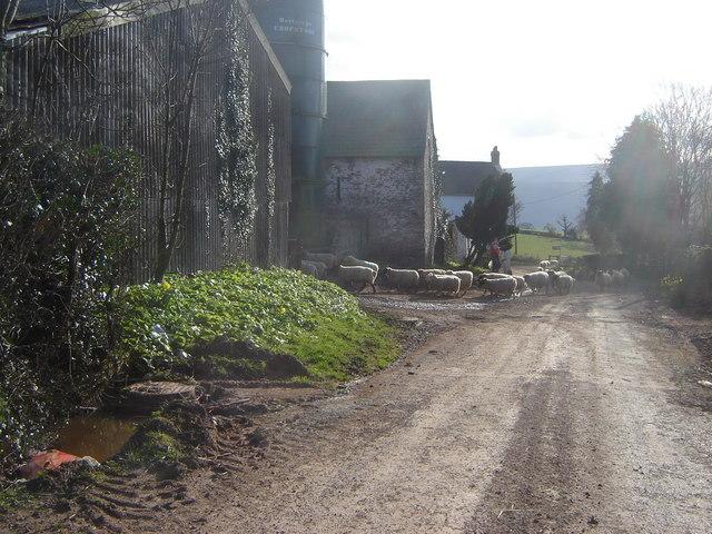 Working farm, Pen-y-Parc