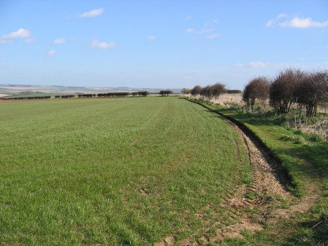 Path Along Field Edge