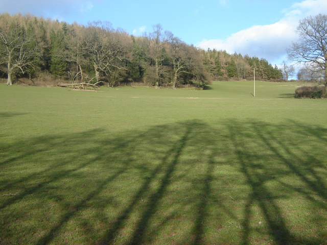 Woodland and evening shadows