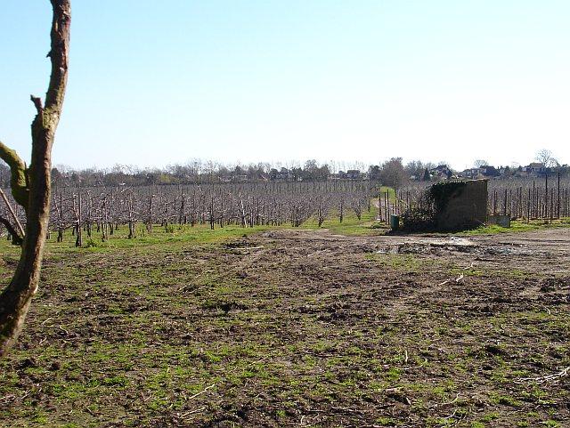 Orchards, Starveacre Lane