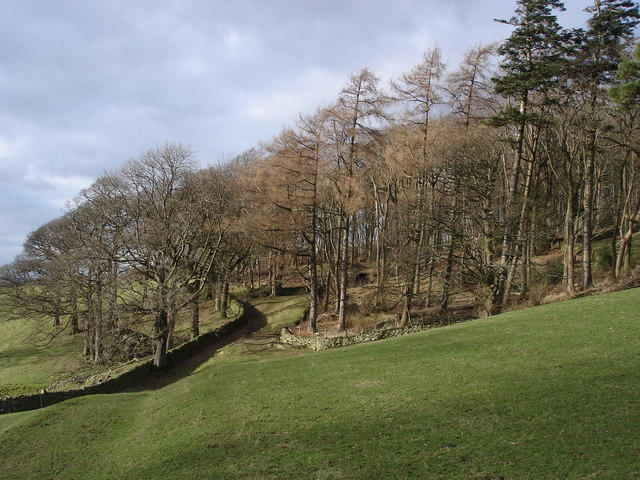 Gap Wood in Dentdale
