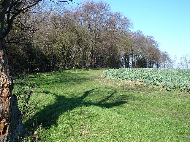 Southern edge of Frid Wood