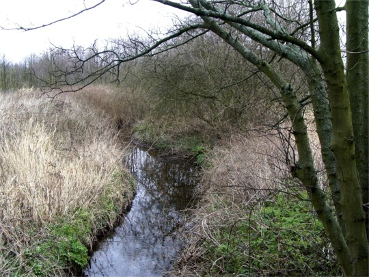Cunscough Brook