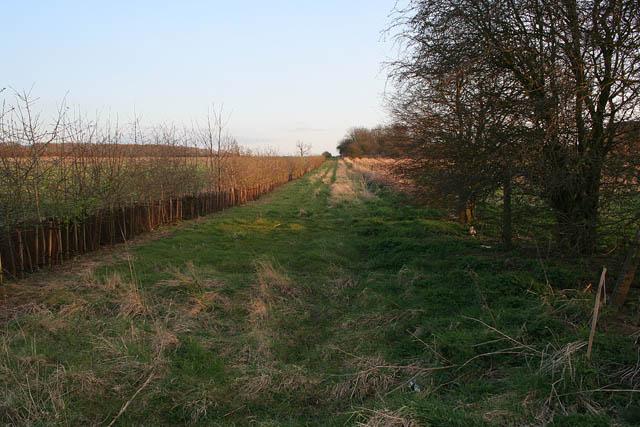 Farm track near Wytchley Warren Farm