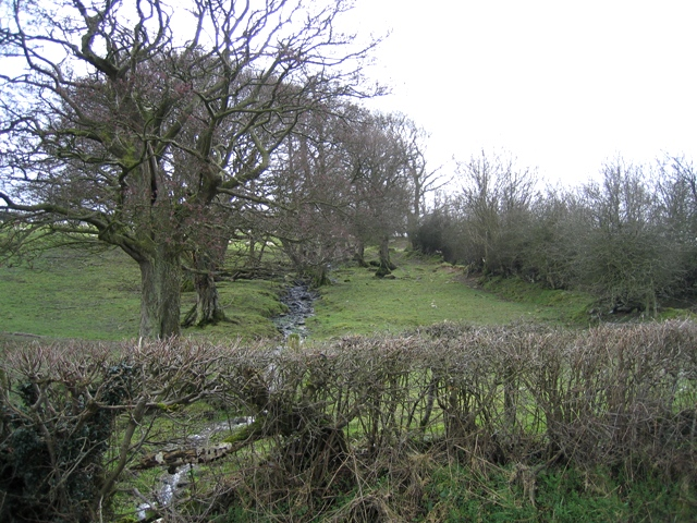 Stream and hedges at Morfydd